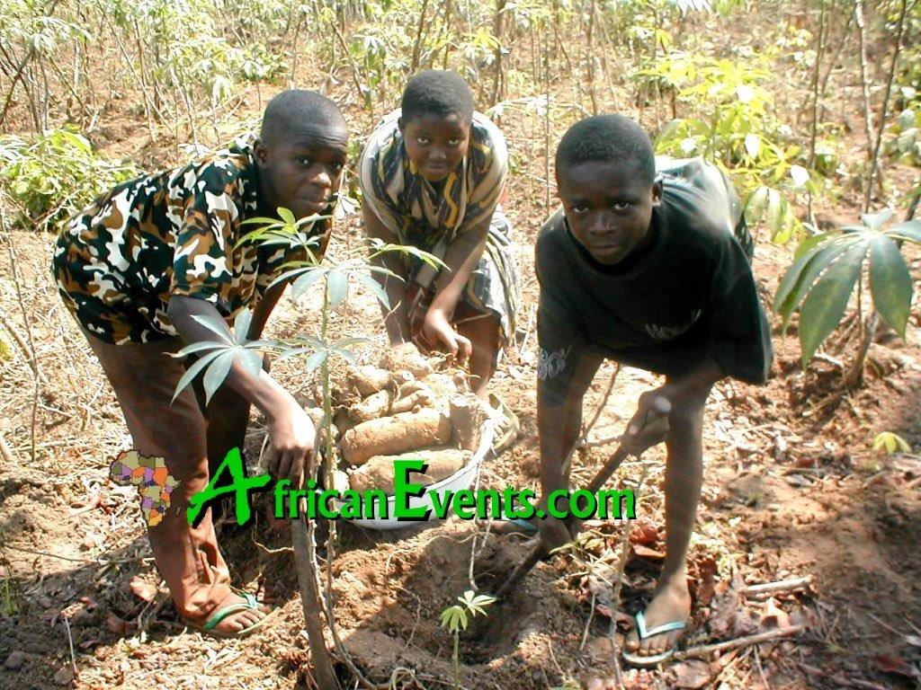 Industrious Ibo youths in a farm - working to survive from a young age